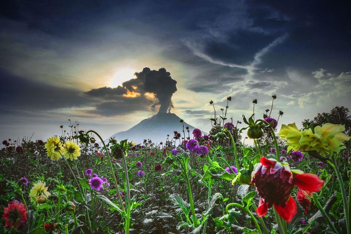 Le volcan Sinabung en Indonésie occidentale s'était assoupi pendant près de 400 ans avant de se ...