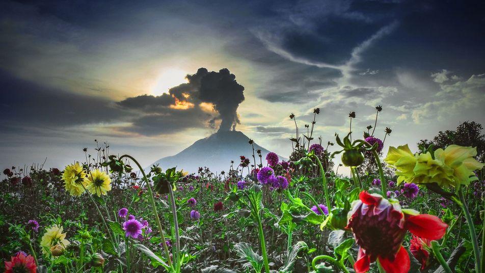 Comprendre : les volcans
