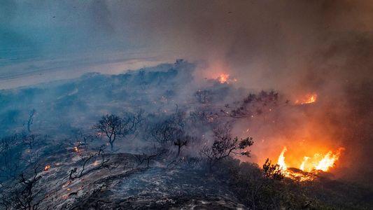 En Australie, un nouveau feu de forêt ravage un écosystème unique au monde