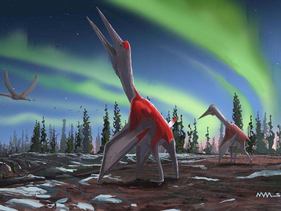 Paléontologie : découverte d'un dragon piégé dans la glace