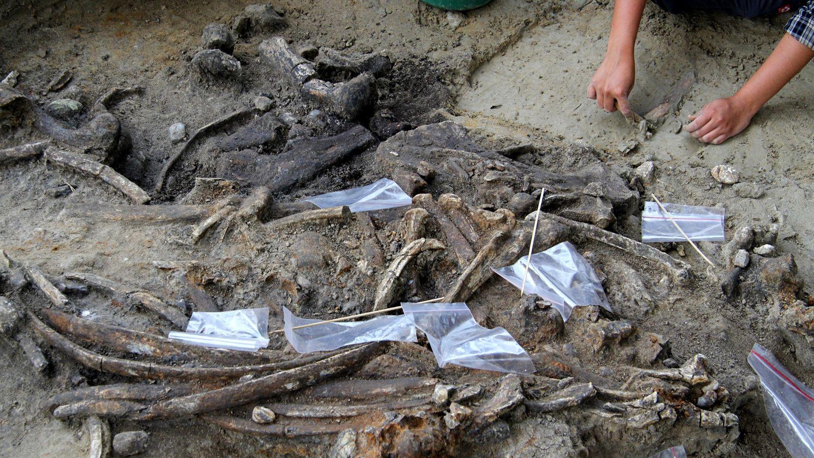À Luçon, une île des Philippines, des archéologues ont mis au jour un site de 700 ...