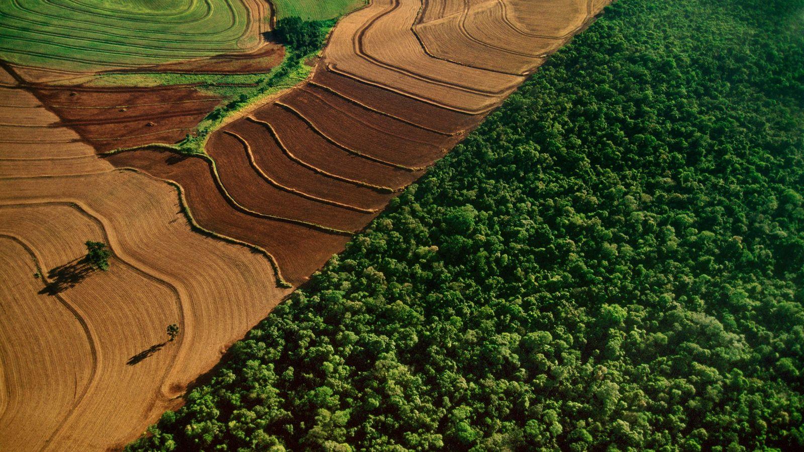 Au Brésil, dans le parc national d'Iguacu, la forêt vierge tropicale rencontre les terres agricoles. À ...