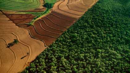 Le nouveau président brésilien souhaite exploiter l'Amazonie. Mais en a-t-il le droit ?