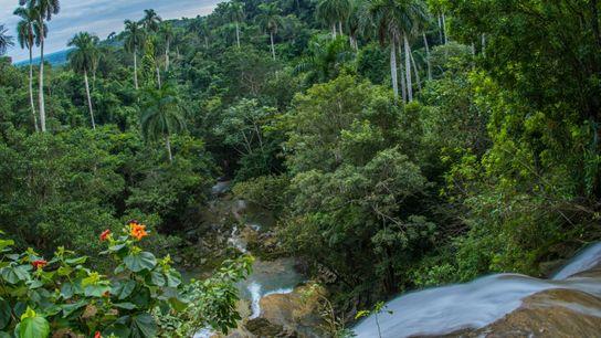 Une cascade serpente à travers une forêt de palmiers royaux, une variété menacée, à Soroa, dans ...