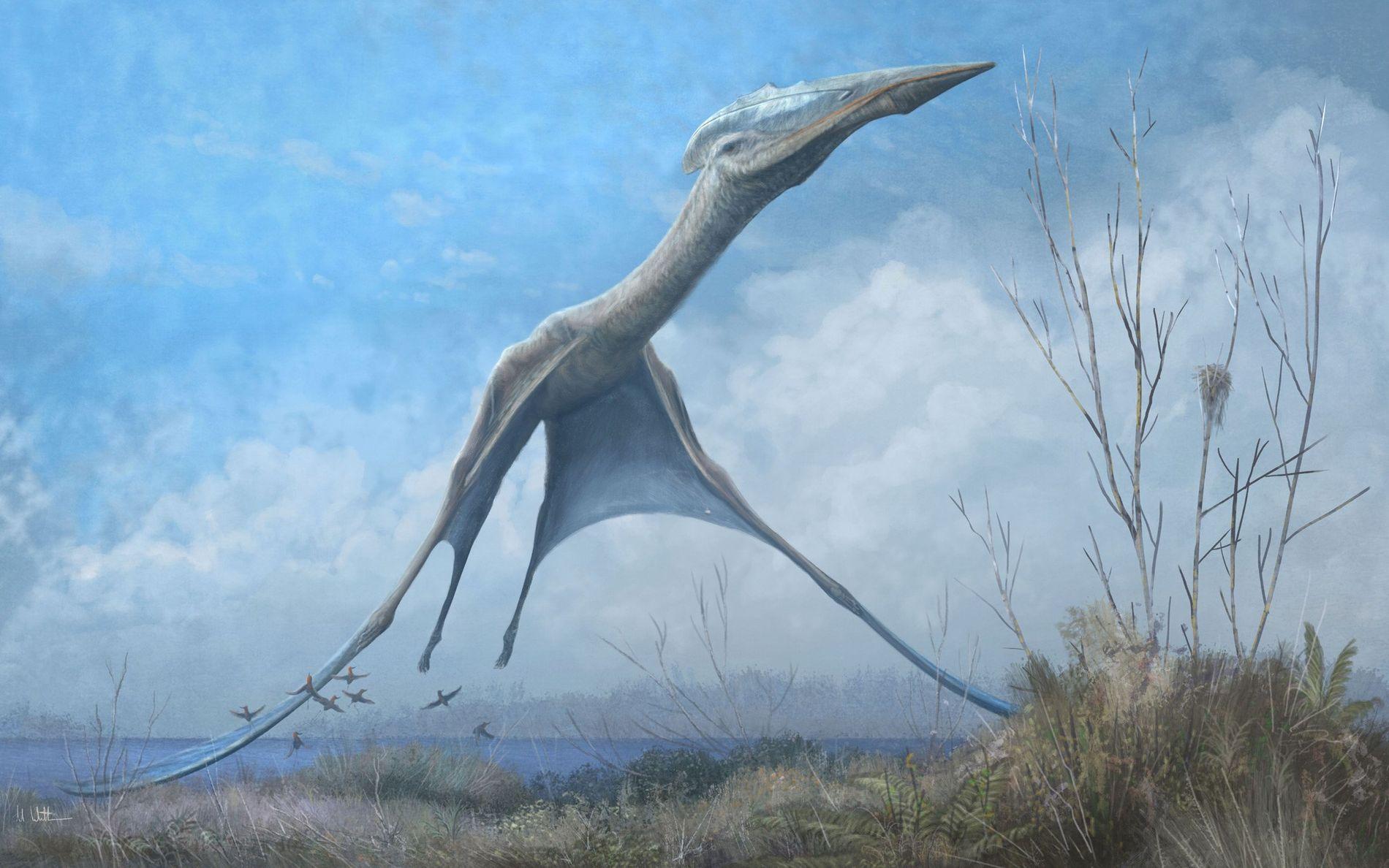 Cette illustration représente un ptérosaure de la famille des Azhdarchidae prenant son envol en Roumanie. Les ...