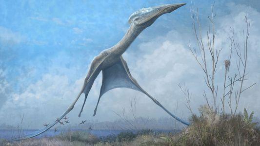 Un os miraculé confirme la présence de ptérosaures en Antarctique