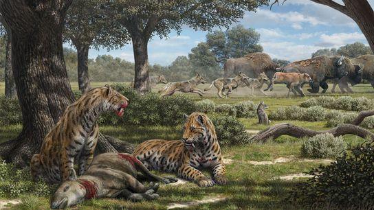 À l'ombre des arbres, des tigres à dents de sabre se régalent d'un herbivore tandis que ...