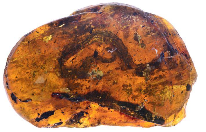 Ce frêle serpent figé dans l'ambre est décrit comme une toute nouvelle espèce, le Xiaophis myanmarensis.