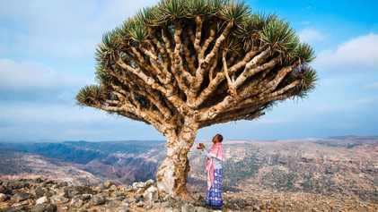 Peut-on encore sauver Socotra, l'archipel yéménite du « sang-dragon » ?