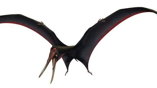 Le récemment baptisé Targaryendraco wiedenrothi déploie ses ailes dans cette illustration.