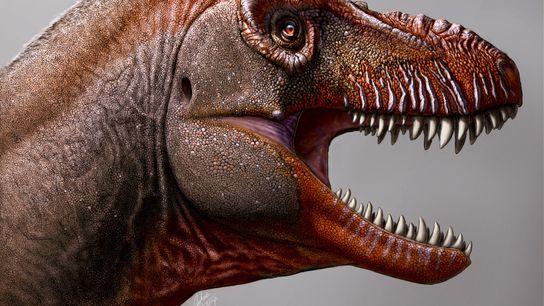 Pour un novice, il est difficile de discerner les différents tyrannosaures, mais les Thanatotheristes présentent plusieurs ...