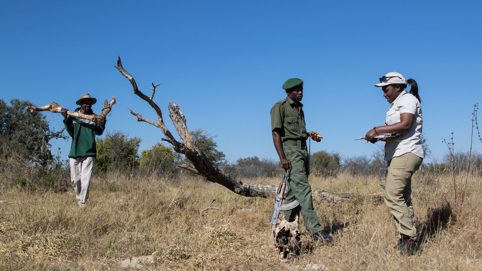Moreangels Mbizah, biologiste de la conservation (à droite) prélève des données et prend des notes sur ...