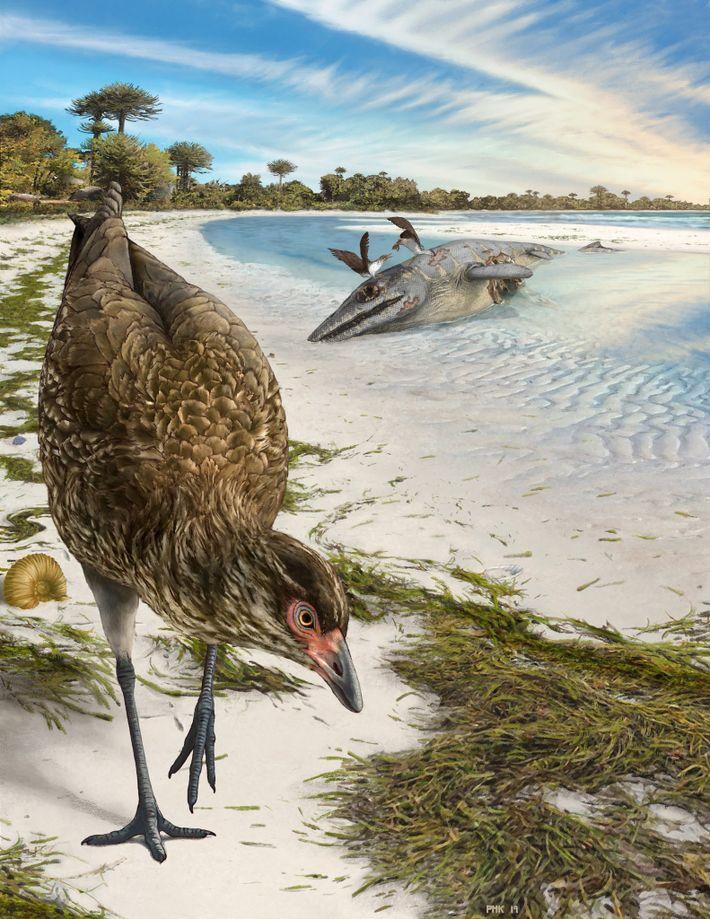 Illustration de l'Asteriornis maastrichtensis, le plus vieux des oiseaux modernes, dans son milieu d'origine. Il y ...