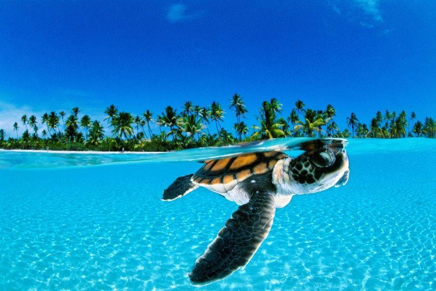 Au Costa-Rica, on revend les œufs de tortue pour protéger l'espèce