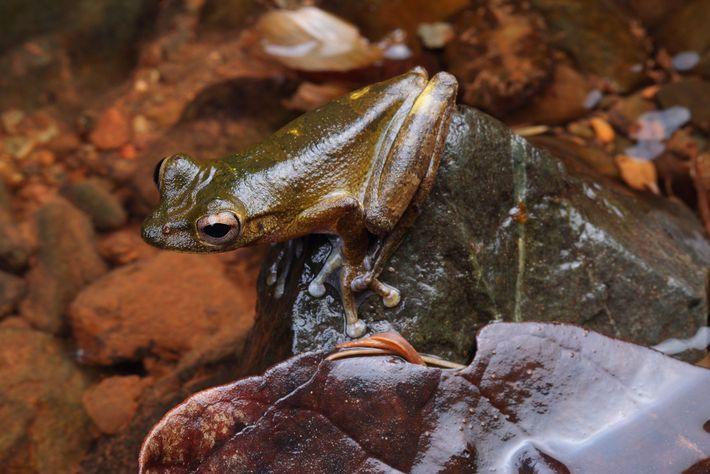 Nous ne disposons pas de ressources suffisantes pour recenser toutes les populations d'amphibiens. Les connaissances des ...