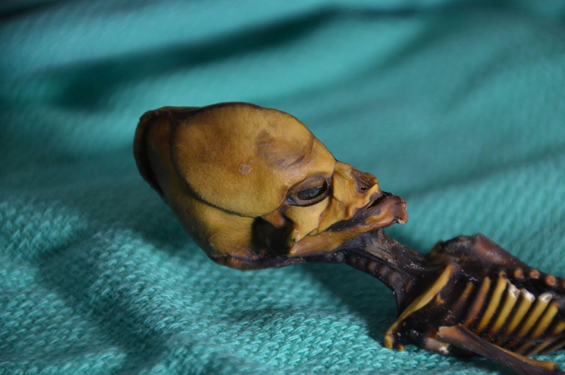 Ata, la momie de 15 centimètres trouvée dans le désert d'Atacama, au Chili.