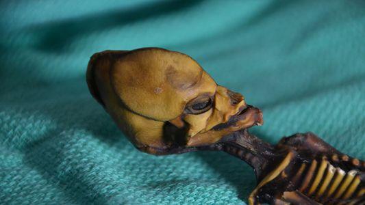 Le mystère de la ''momie extraterrestre'' d'Atacama élucidé par une analyse ADN