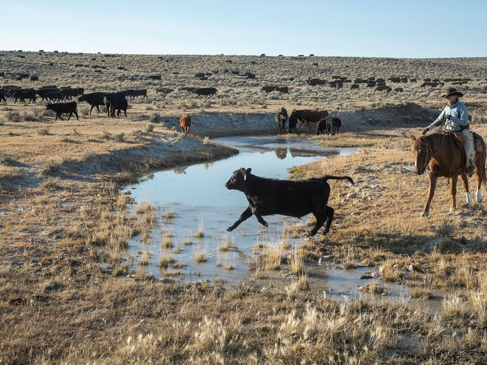 Manger de la viande aurait pour conséquence d'assécher les fleuves