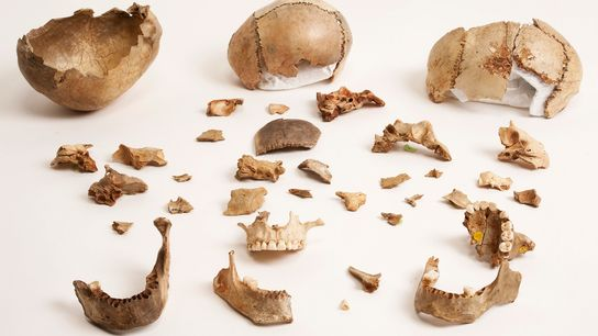 Fragments d'os extraits de la grotte de Gough en Angleterre. Les preuves de ce site du Paléolithique ...