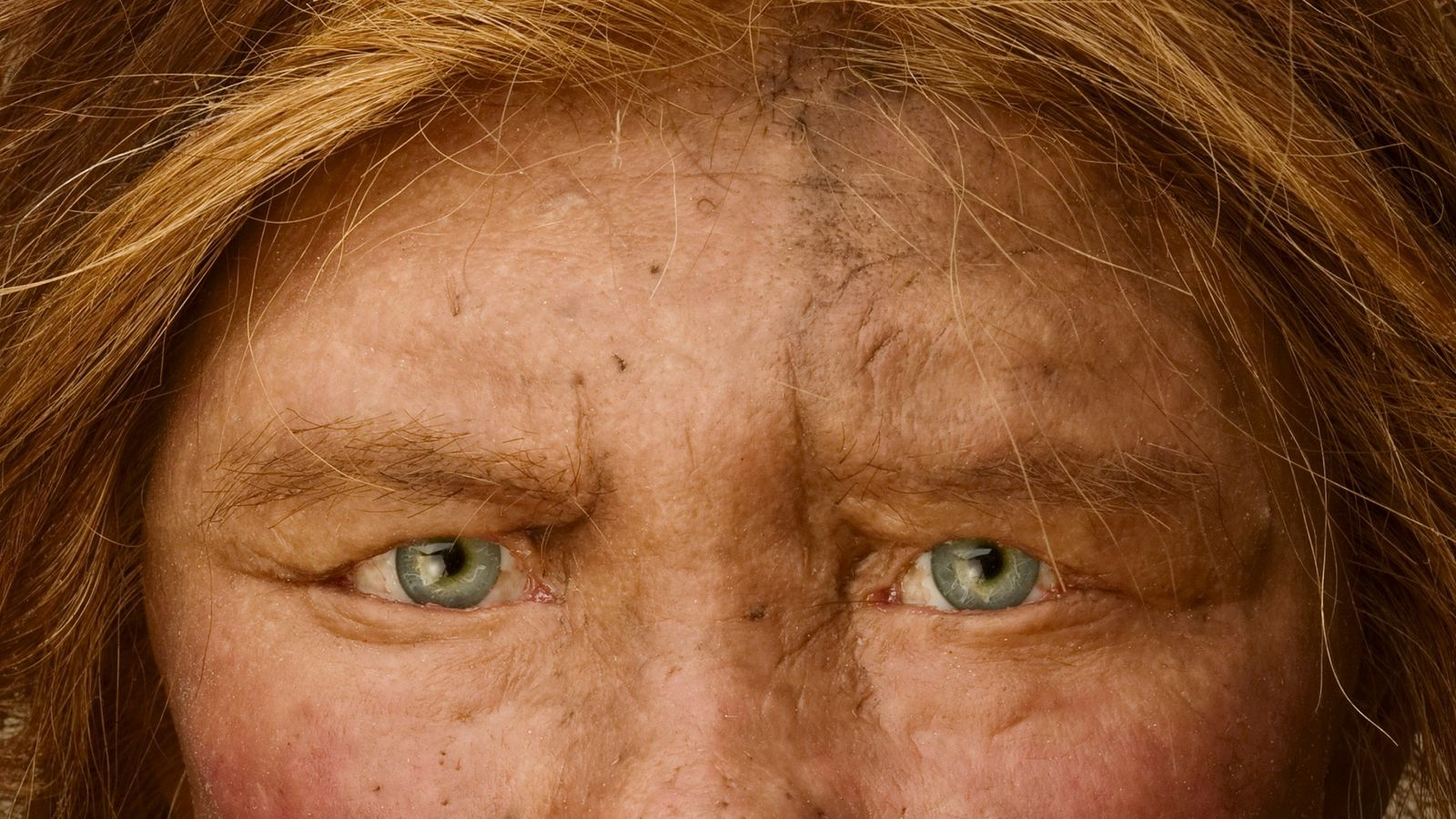 Ce regard perçant est celui d'une reconstruction d'un Homme de Neandertal, un ancêtre qui partageait la ...