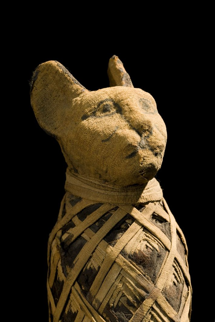 Une momie de chat égyptien.