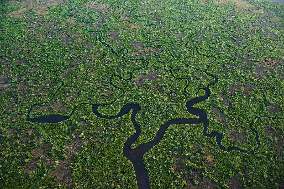 À mesure que le niveau de la mer augmente, les eaux salées envahissent les Everglades en ...