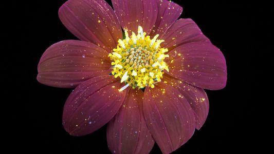 Les fleurs comme vous ne les avez jamais vues