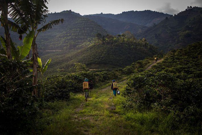 Une fois la journée de travail dans les plantations de café terminée, Yuliana et ses collègues ...