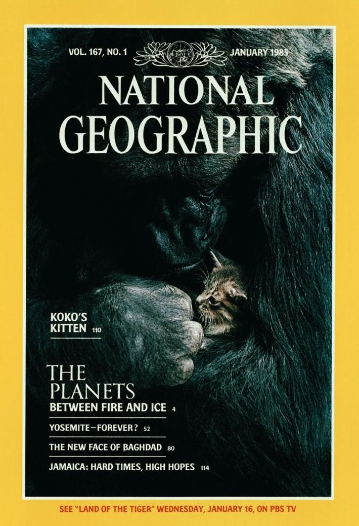Photo de couverture du National Geographic réalisée par Ronald Cohn.