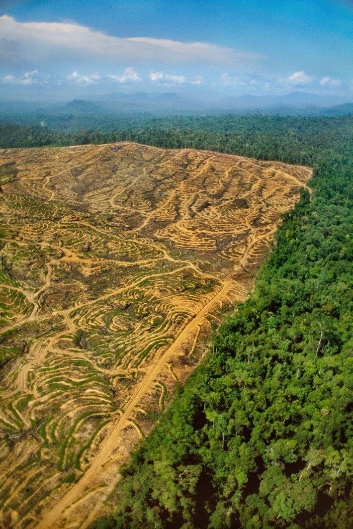 Les forêts tropicales de Bornéo portent les stigmates de l'exploitation forestière.