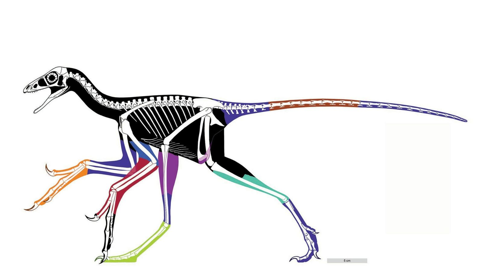 02-late-jurrasic-anchiornis