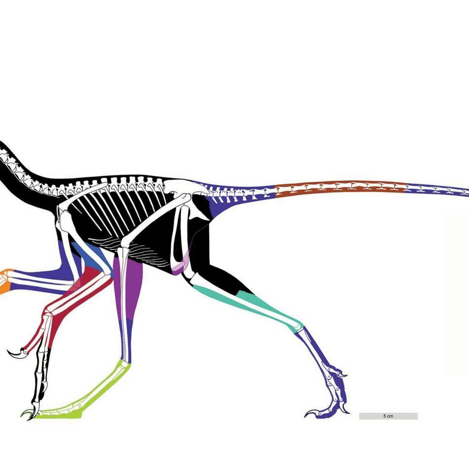 Ce portrait de dinosaure serait le plus précis existant à ce jour