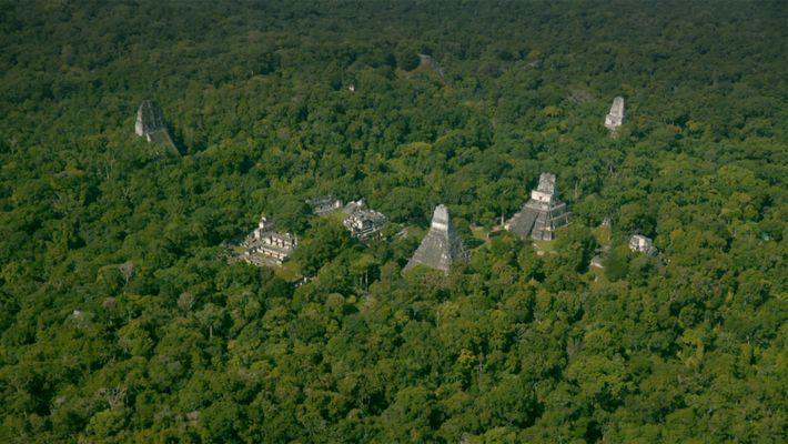 Sous cette forêt dense se cache des ruines de la civilisation maya qui restent encore à ...