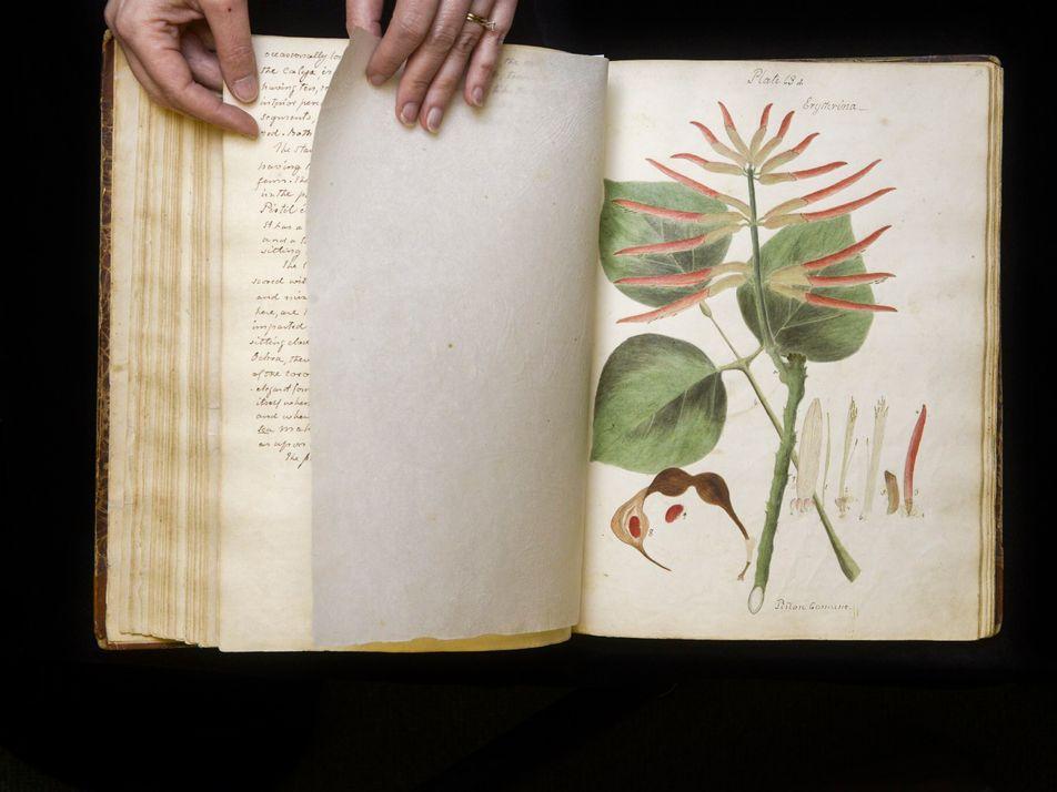 Un manuscrit scientifique illustré retrouvé 190 ans après sa disparition