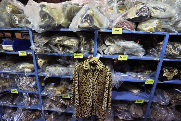 Cette veste en peau de léopard saisie par les autorités est suspendue à une étagère truffée ...