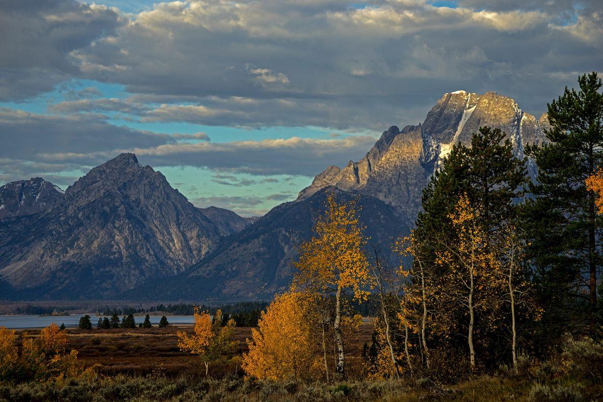 Depuis Jackson Hole, les monts Grand Teton offrent un arrière-plan exceptionnel aux feuilles et à leur …