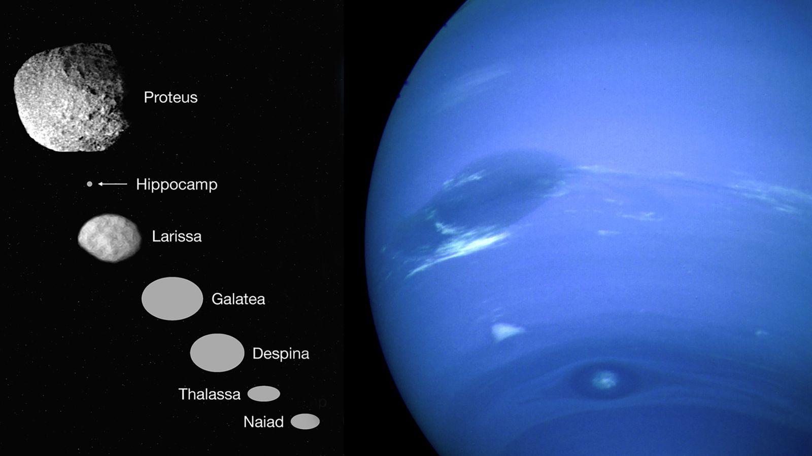 En 1989, Voyager 2 a survolé Neptune, à droite, et a repéré six petites lunes intérieures, ...
