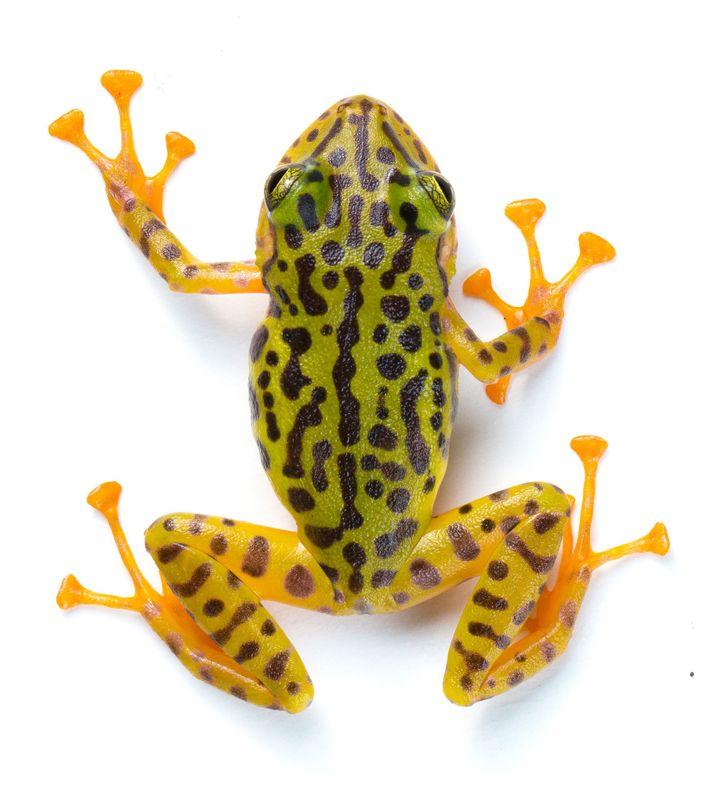 02-new-frog-species-ecuador