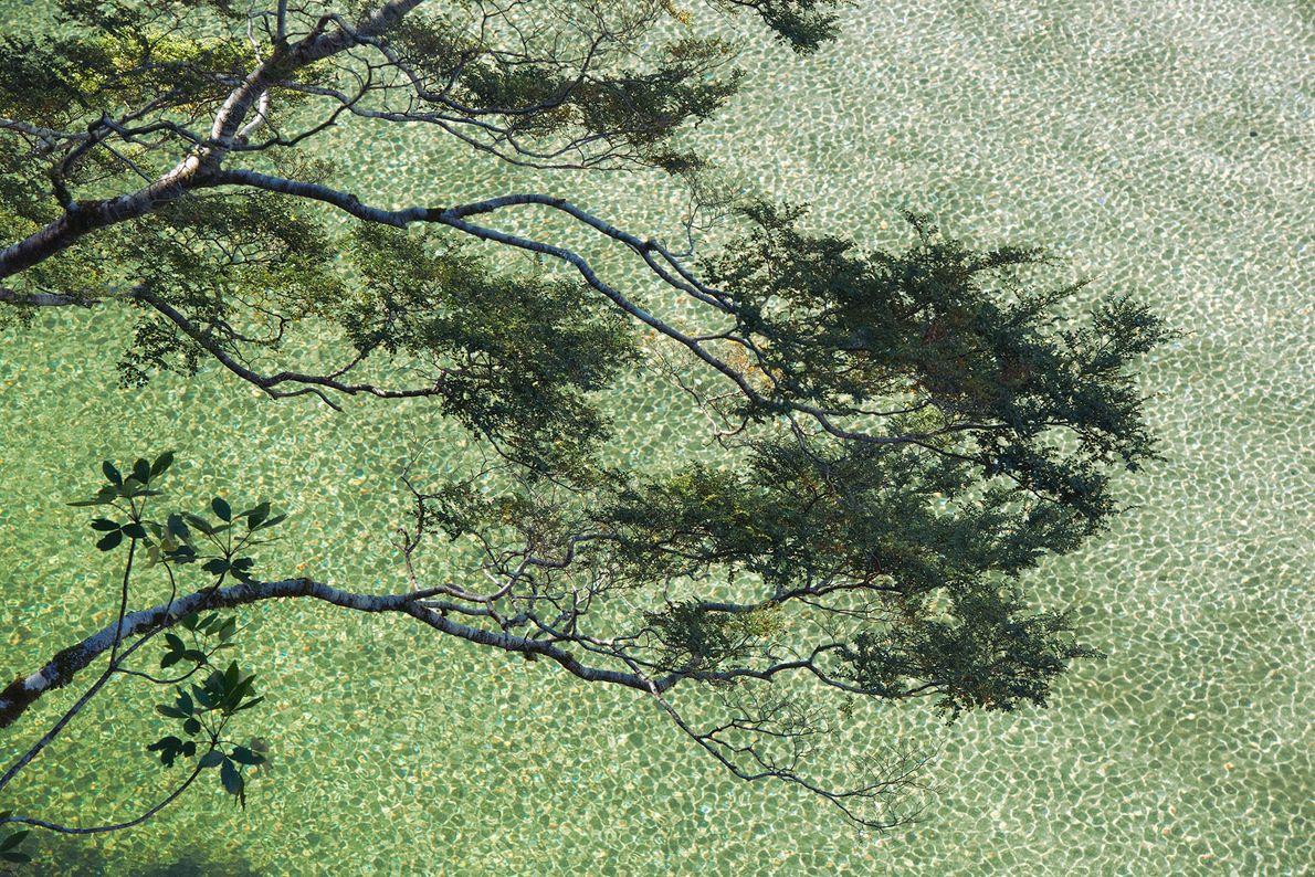 Les branches d'un hêtre et d'un jeune arbre à feuilles larges surplombent le lac Ada dans ...