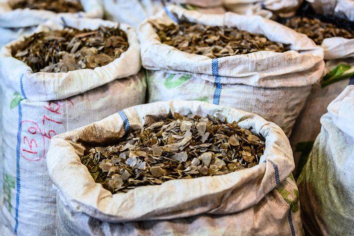 En février, les douaniers de Hong Kong ont saisi huit tonnes d'écailles de pangolins en provenance ...