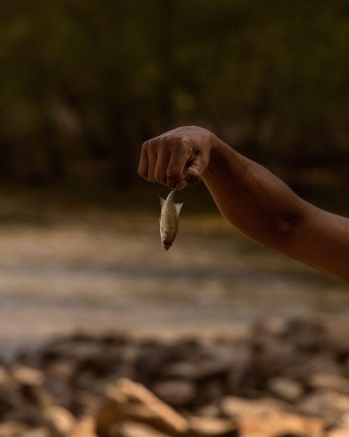 D'Anthony Brown tient un poisson-appât. Un moratoire ciblant la pêche au bar rayé est en vigueur ...