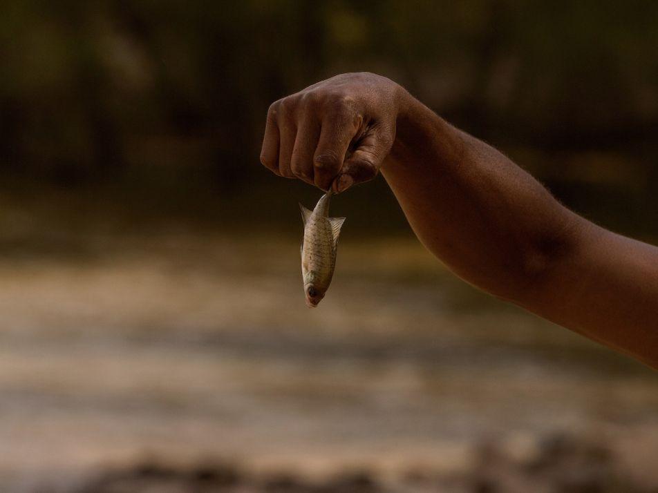 Substances nocives éternelles : des populations de poissons contaminées