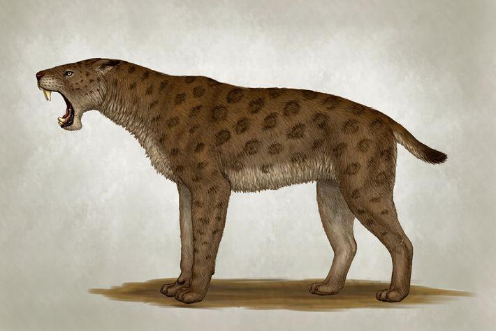 Une illustration du tigre à dents de sabre Homotherium latidens.