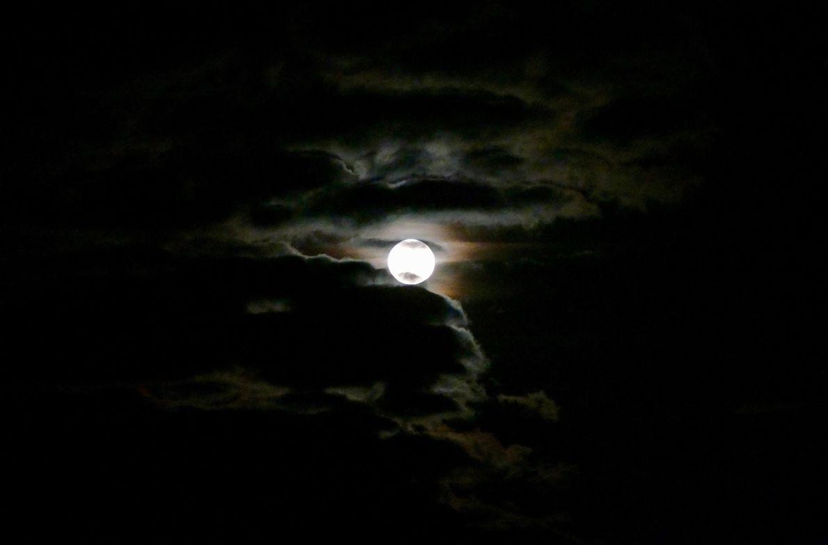 La super Lune éclaire la Forêt de Wareham dans le Dorset, au Royaume-Uni.