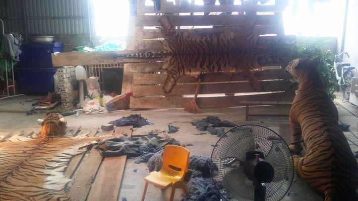 Les enquêteurs sous couverture de la Wildlife Justice Commission se sont rendus dans une maison au ...