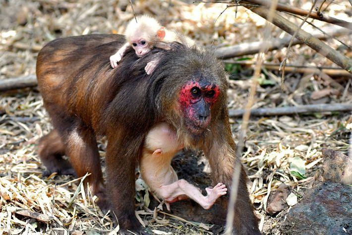 La mère des jumeaux porte un bébé dans ses bras tandis que l'autre est monté sur ...