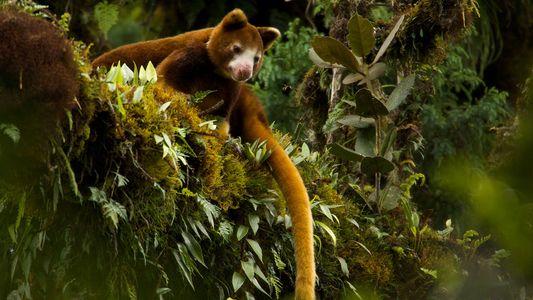 Ces créatures insolites qui peuplent les arbres