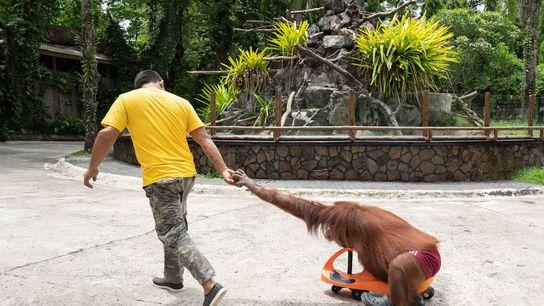 Dans un nouveau rapport rédigé par la Société mondiale de protection des animaux, l'Association mondiale des ...
