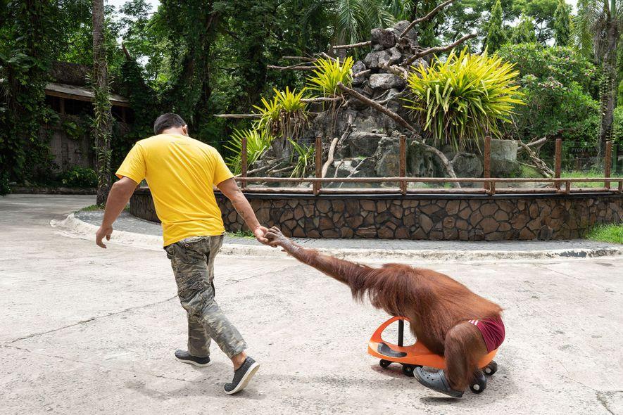 Des centaines de zoos et aquariums accusés de maltraitance animale