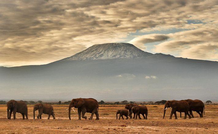 Au-delà de la menace que représente le braconnage d'ivoire, il faudra encore assurer la coexistence pacifique ...